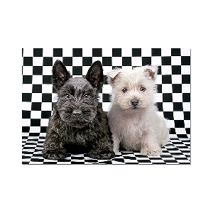 Пъзел 500 части CHECKED TERRIERS